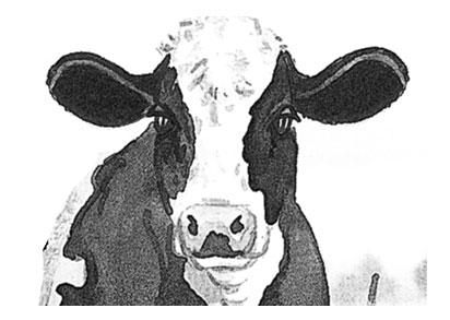 van Hummel veehandel/cattle export